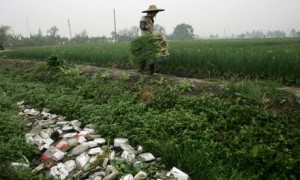 Chinese Farm Pollution
